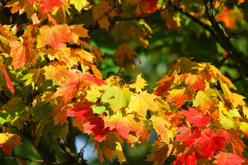 autumn-209479_1920