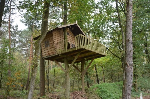 tree-house-1778884_640