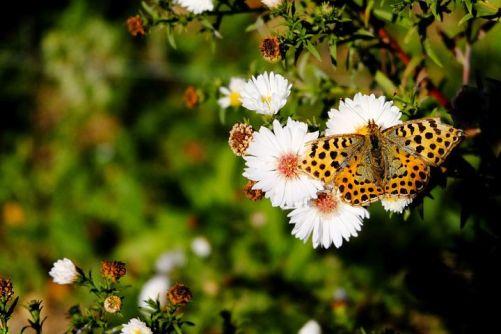 butterfly-992585__480.jpg