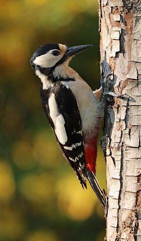 woodpecker-1411082__480.jpg
